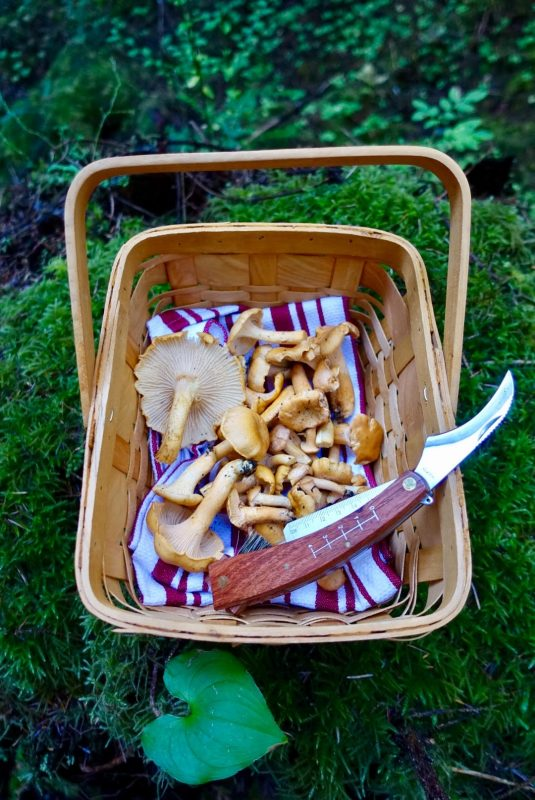 Local foraging for mushrooms